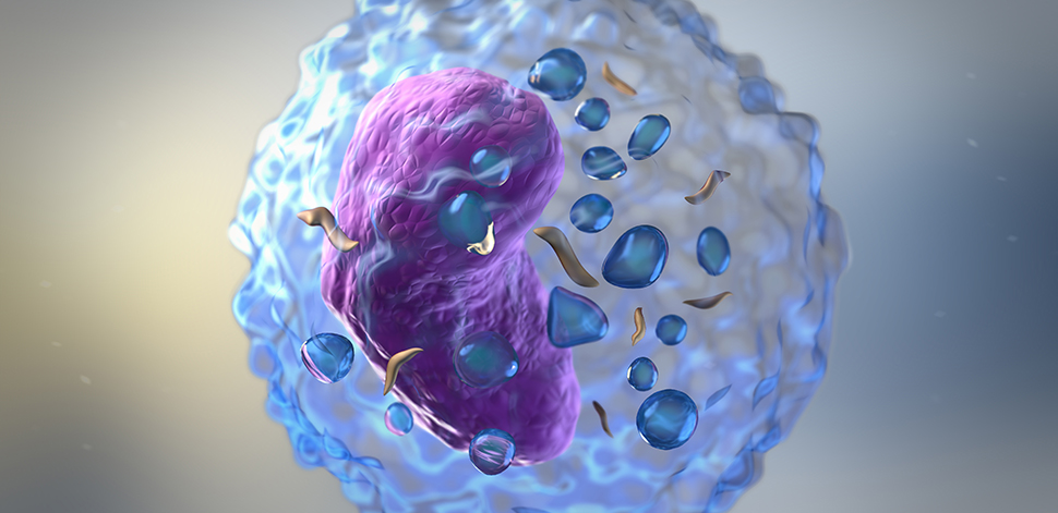 Common Cell Type Found in Autoimmune Diseases