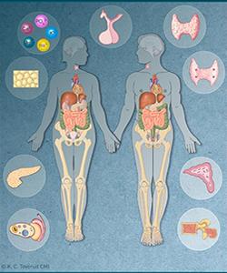 hormoner i ubalanse