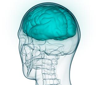 Gjennomsiktig hode sett bakfra, med skjelettet og en blå hjerne tegnet inn.