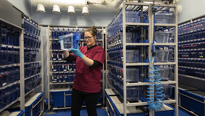 Photo of a researcher in a lab full of small aquariums with fish