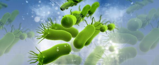 Image of green bacteria