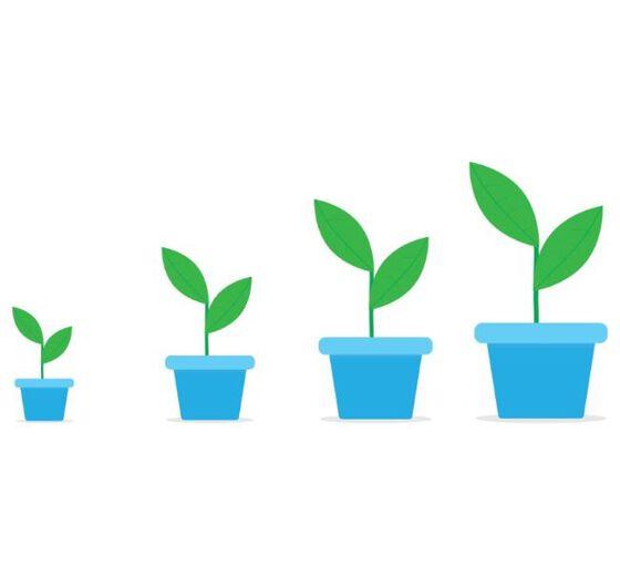 Graphic showing seedlings growing