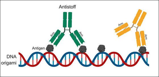 Illustarsjon: DNA-molekyl med to trearmete figurer oppå