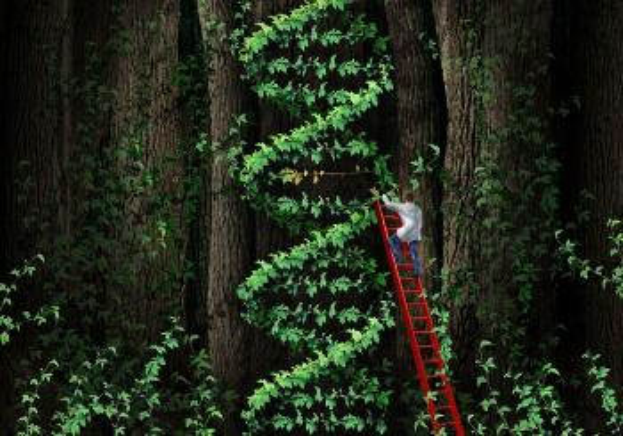 Mann i stige som kutter i en klatreplante formet som et DNA molekyl.